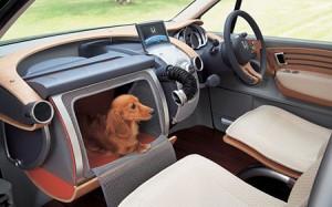 Dog House in Car - Stash